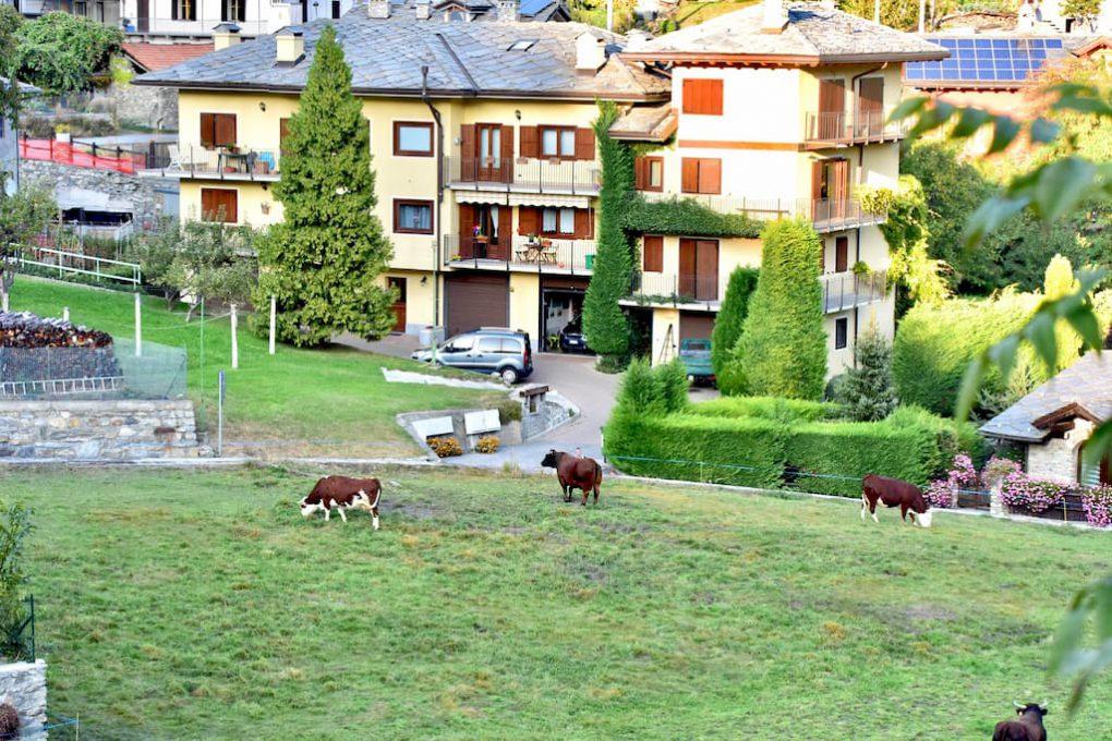 アオスタは牛と人が共存している写真