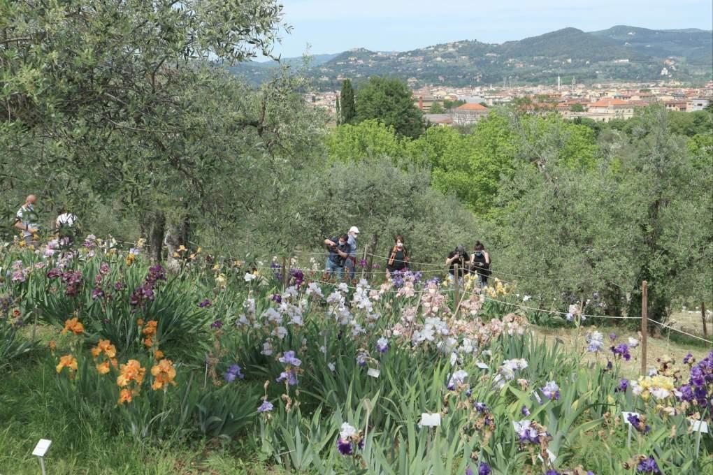 フィレンツェのアイリス庭園