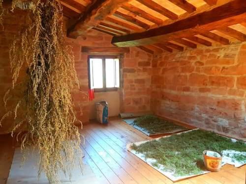 ロレッタの家のハーブ乾燥室、山の空気はハーブの保存に適している