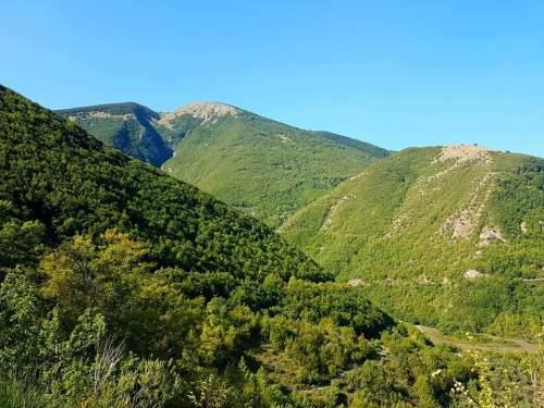 深い緑に包まれるネローネ山