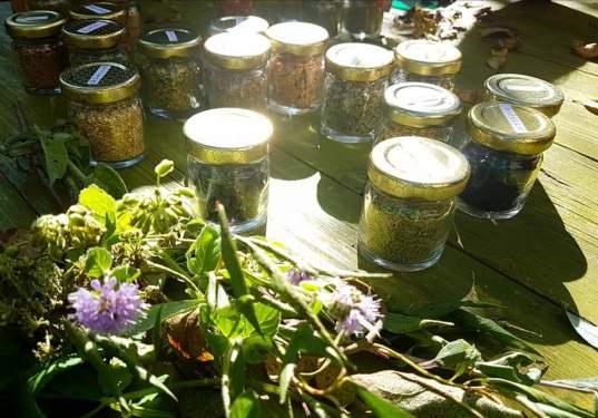 それぞれ旬の季節に摘み、保存されているハーブたち
