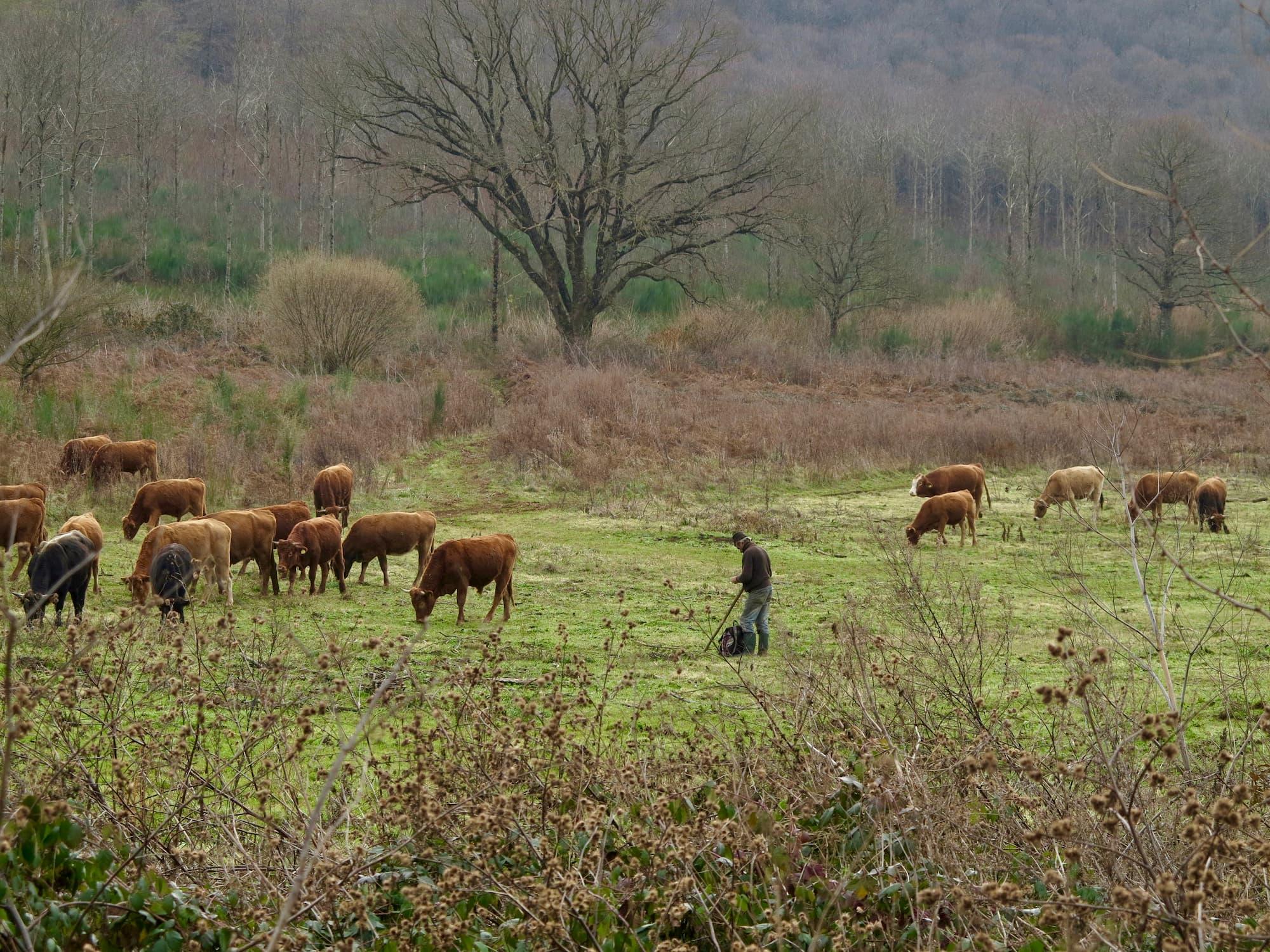12月の小雨の降るなか、ラツィオ州ネーミ近郊で牛を追う牧夫