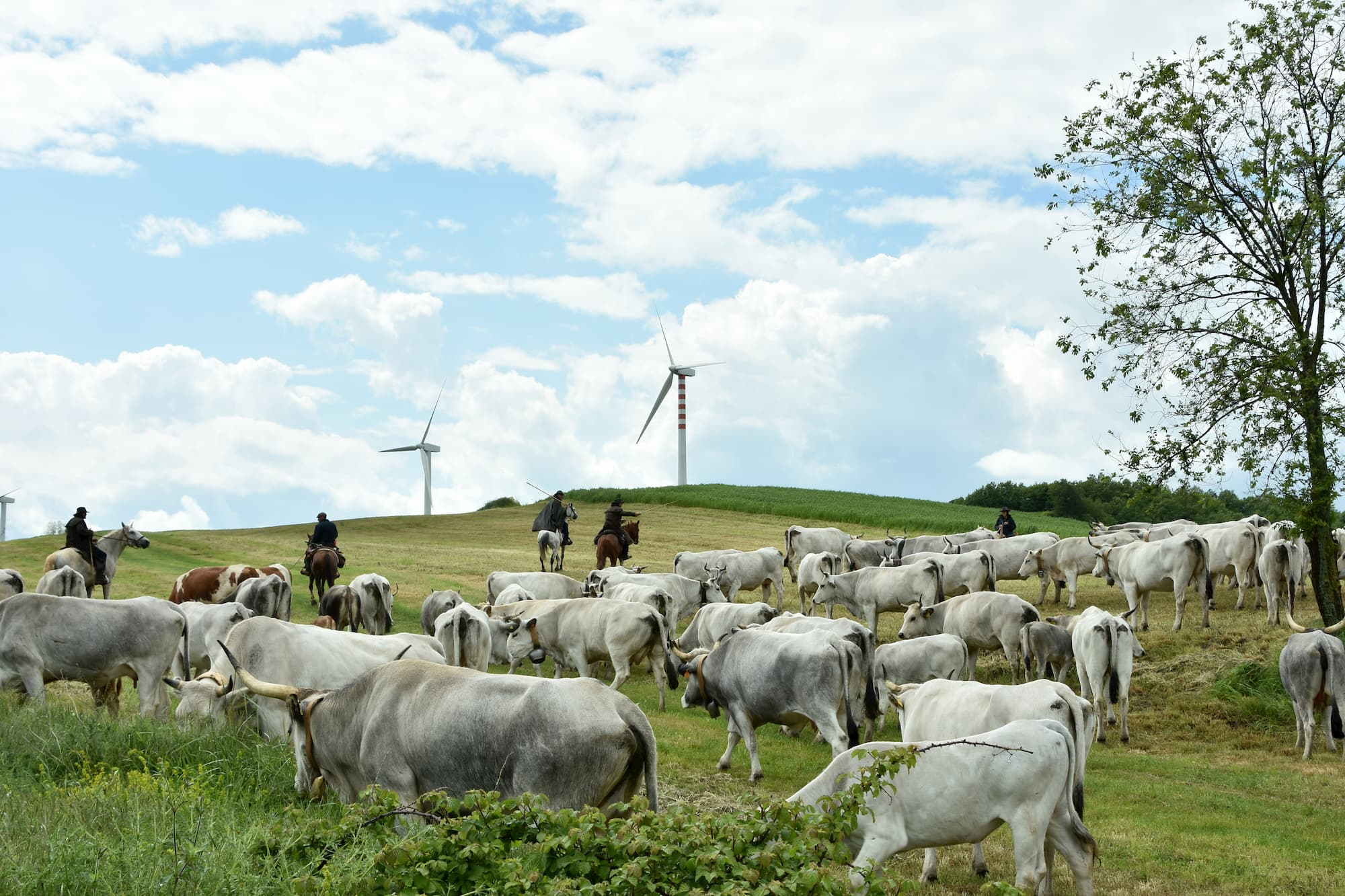 すでに消滅しつつある「移牧」を継続し、地域の価値の向上につなげようとするグループ