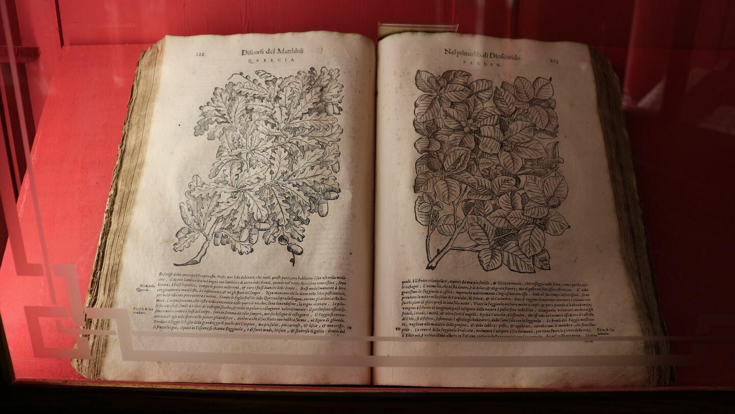 植物に関する本