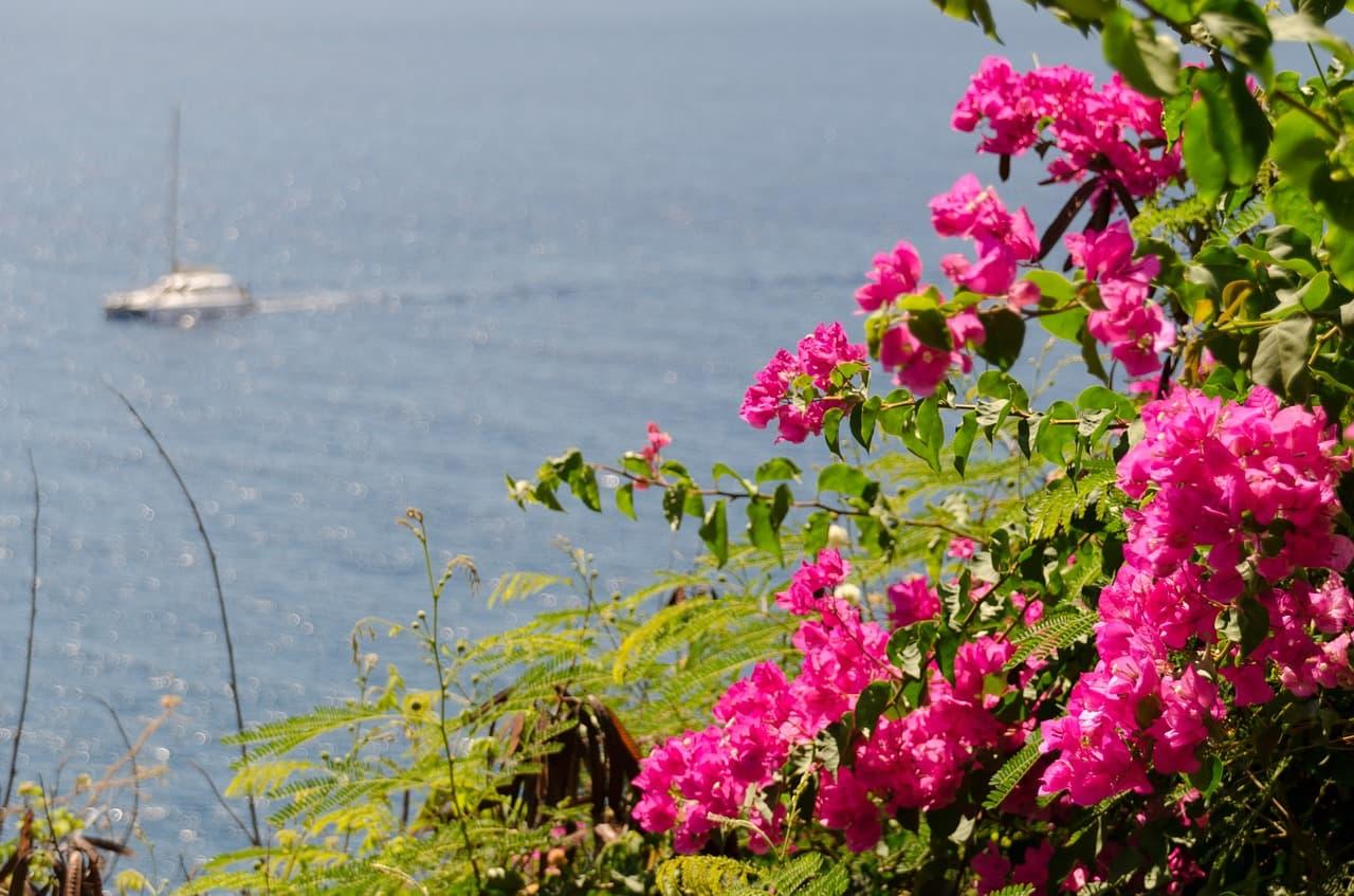梶谷さんが一番好きなイタリアの花ブーゲンビリア