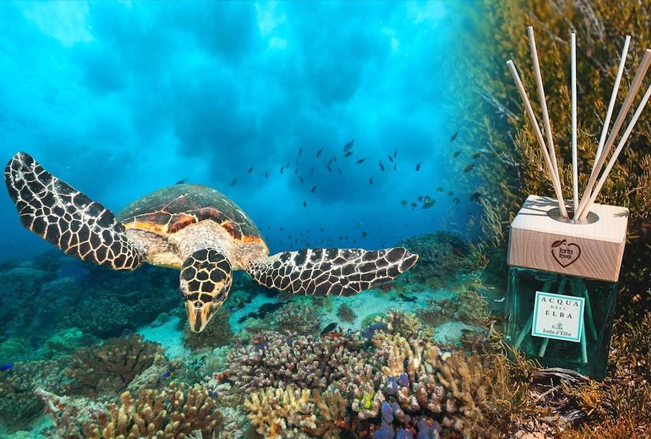 ホーム・フレグランス「イゾラ・デッレルバ」のウミガメ保護プロジェクト・エディション。Tarta Loveの印が。