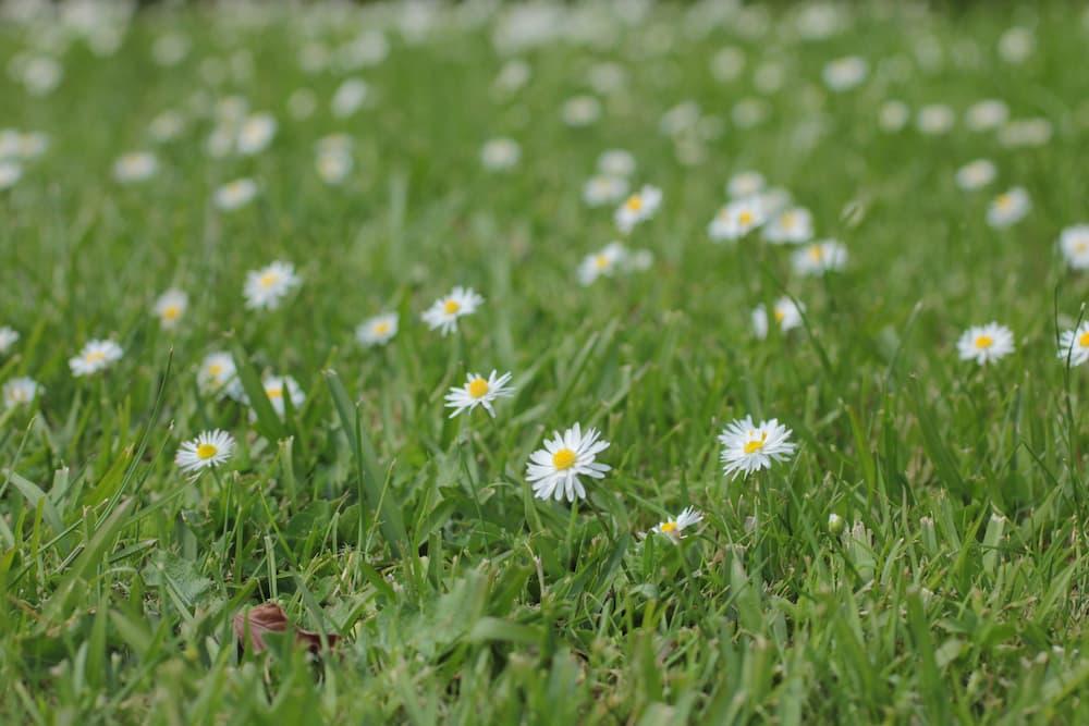 花が咲く野原の様子
