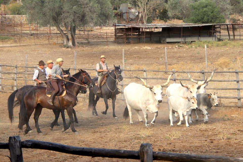 見事な手綱さばきで馬を操りながら牛を柵へと追い込んでいくブッテリたち。エトルリア時代から伝承されてきた馬術です。ジューリアさんの農園の場合、宿泊客だけでなく、予約をすれば一般来場者も有料で観覧可能です。